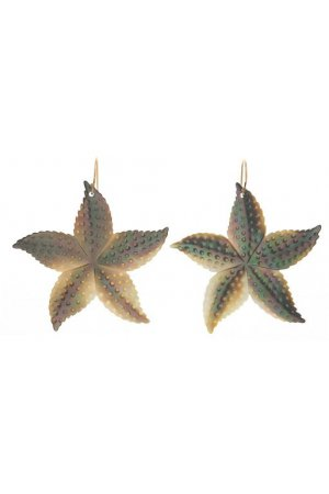 STAR-FISH SHELLS